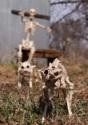 Skeleton Cat alt 2