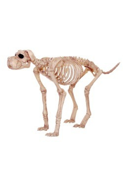 Bruiser Bonez the Skeleton Dog