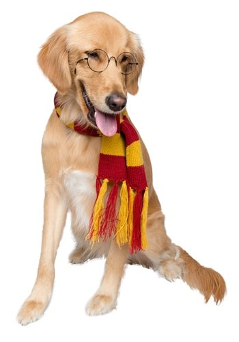 Hipster Wizard Pet Scarf