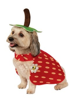 Yummy Strawberry Dog Costume