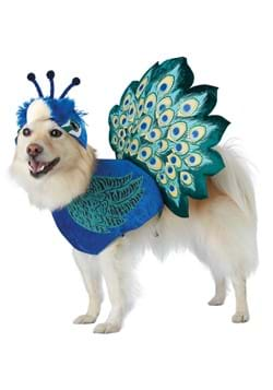 Pretty as a Peacock Pet Costume